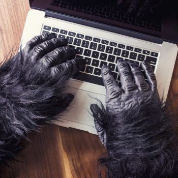 Gorilla hands on laptop